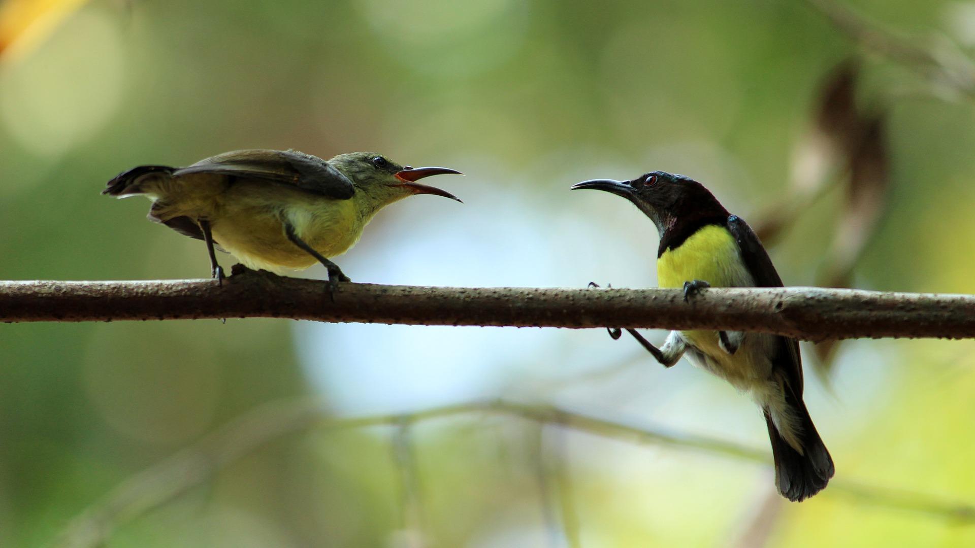 Uccelli ramo